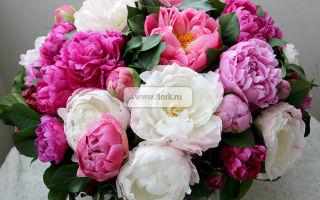 VIP букеты цветов — искусство удивлять