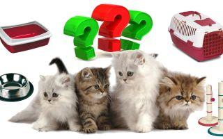 Что нужно купить для ухода за кошкой