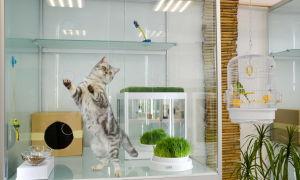 Гостиница для животных недорого