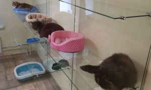 Передержка для кошек в СПб