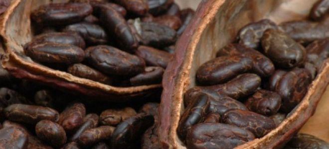 Урбеч из цельных какао бобов: удовольствие с пользой для здоровья